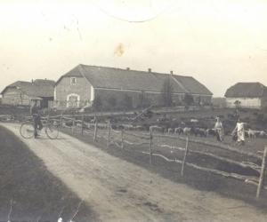 Kurzemes bēgļu lopi pie Liezēres Salnaskroga, 1915. gads